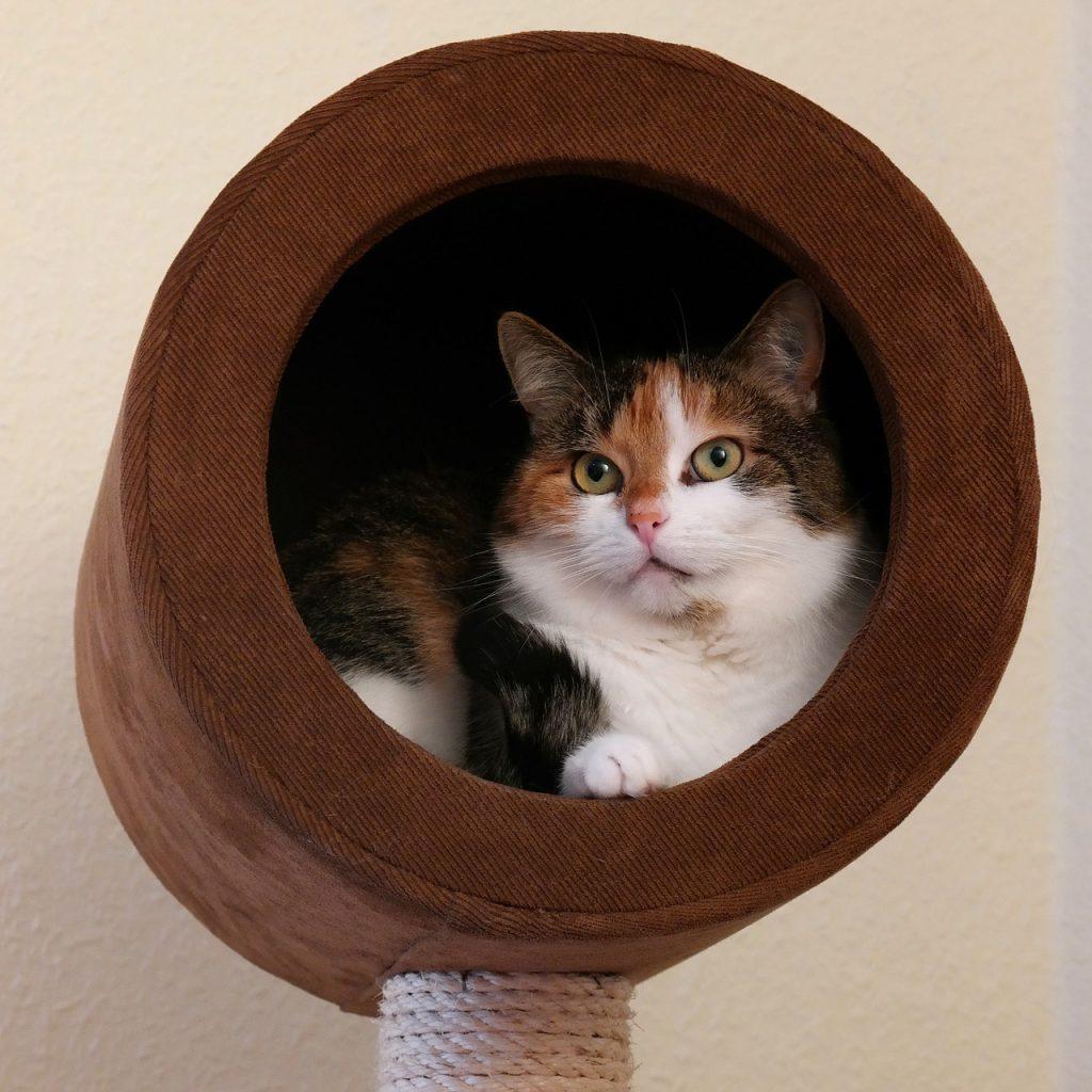 Jak wyposażyć dom, gdy ma się kota?