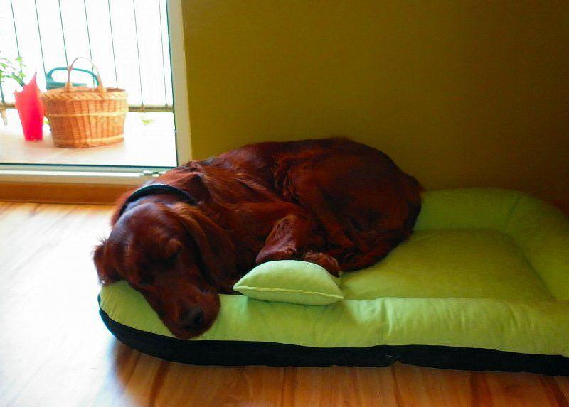 Dlaczego legowisko dla psa jest tak ważne?