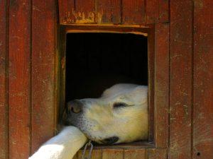 obroża led dla psa